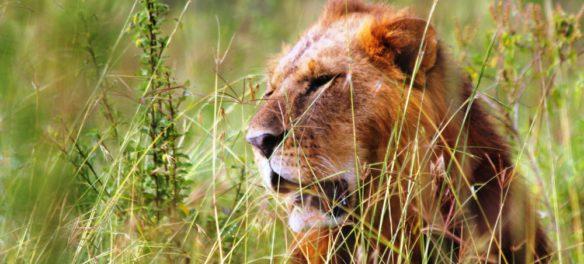 Кения + Сейшелы с Meteors Travel